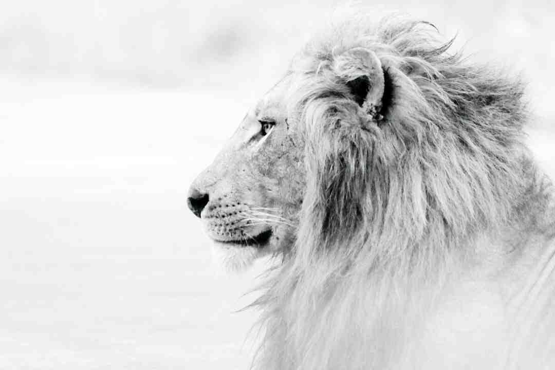 Danse : Danse du lion Comment apprendre à danser