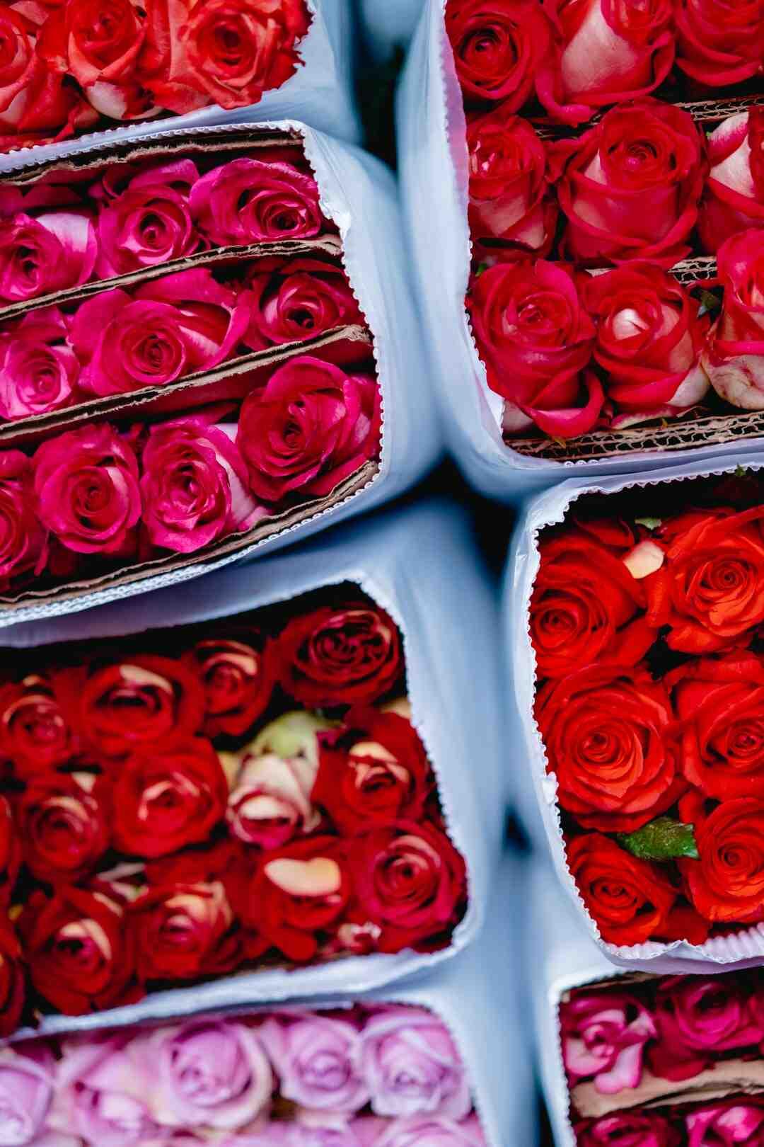 Qui est Saint-valentin PDF ?