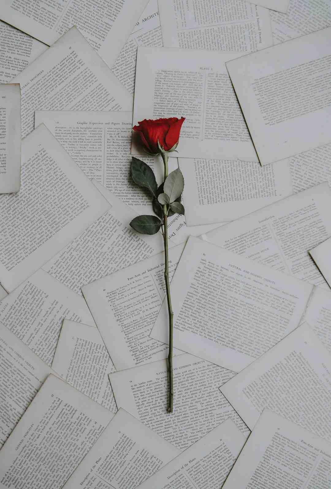 Comment oublier un amour